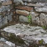 Ruine de la chapelle Languidou à Plovan (12)