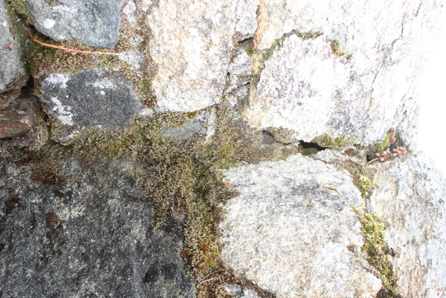 Ruine de la chapelle Languidou à Plovan (13)