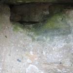 Ruine de la chapelle Languidou à Plovan (5)