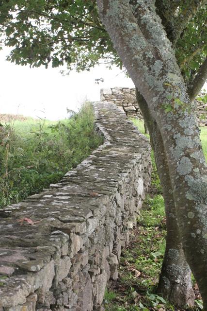 Ruine de la chapelle Languidou à Plovan (50)